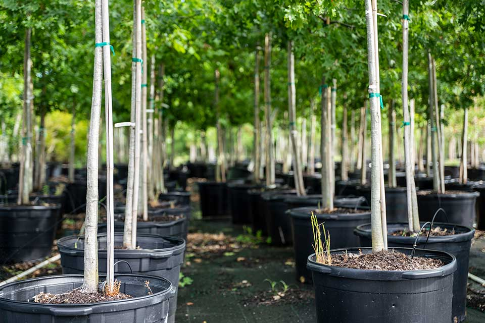 Grants Creek Nursery trees